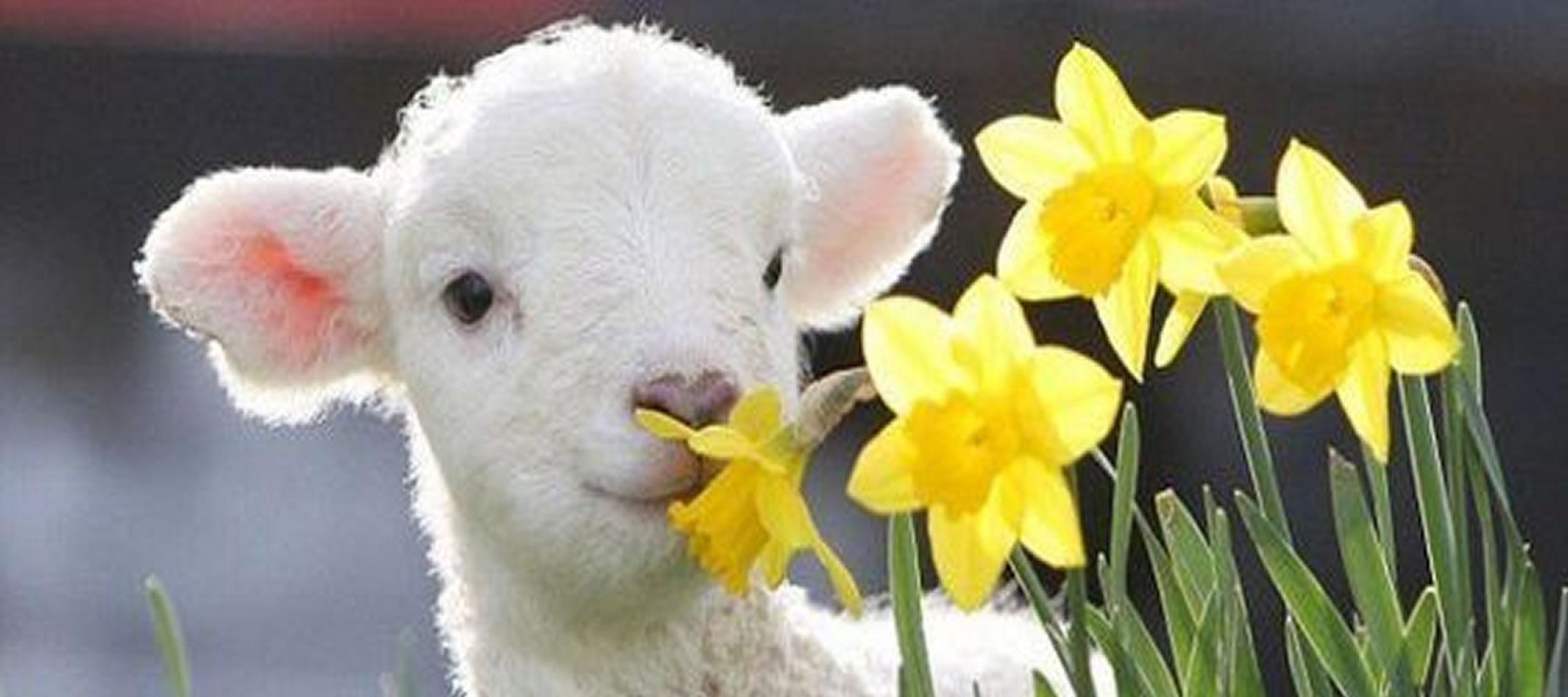 Razão para comemorar a Páscoa